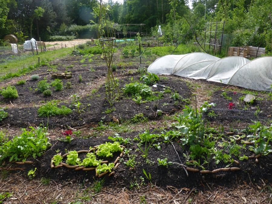energetische tuin.JPG
