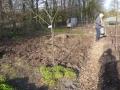 compost voor pompoenen.JPG