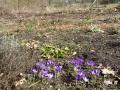 voorjaar in de vlindertuin.JPG