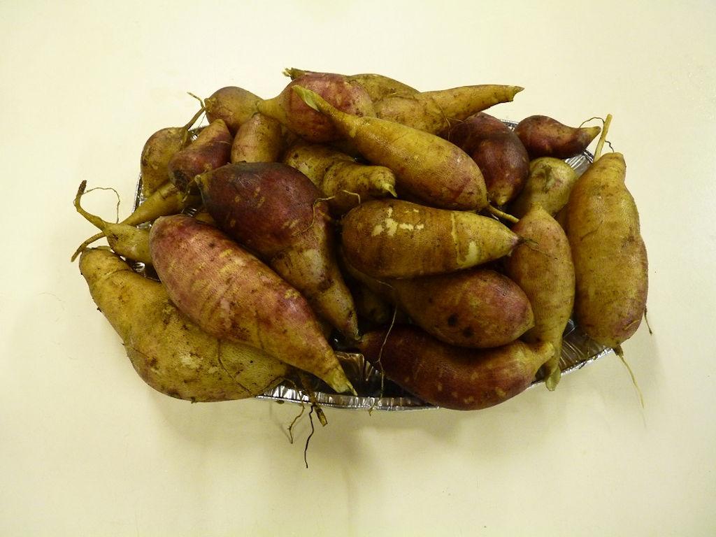 Yacon eetbare wortels